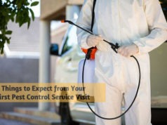 6 Things to Expect from Your First Pest Control Service Visit