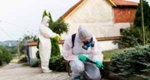 Why Is Pest Control Essential for Business During COVID-19