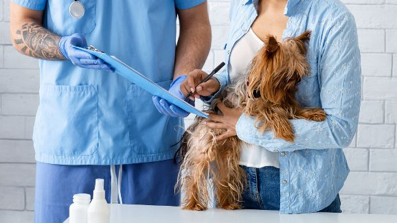 5 Things to Know When Choosing a Vet
