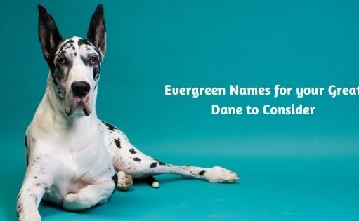 Evergreen Names for your Great Dane to Consider