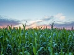Most Profitable Crops to Grow For Small Farmers in Small Farms